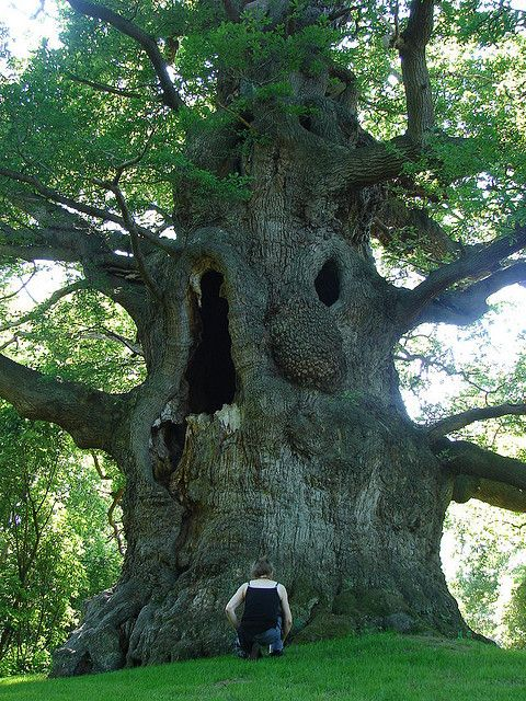 Amazing tree! This reminds me of the owl in that movie The Secret of Nimh