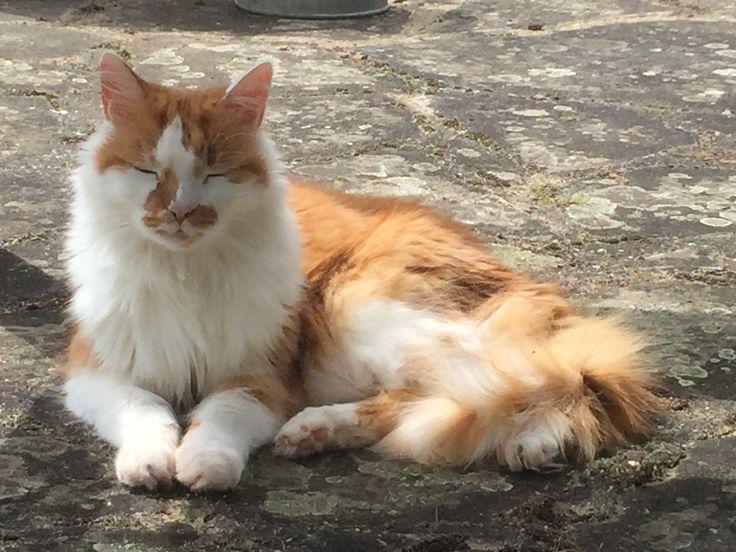 My beautiful boy Freddie