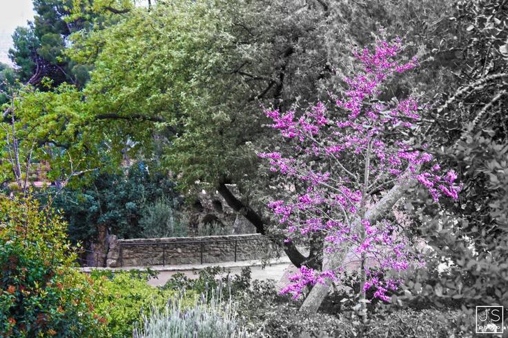 … de um lilás no Park Guel.