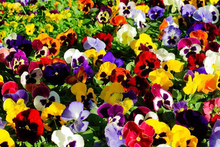 Virágok szimbolikus jelentése A-É: az ábécé elején elhelyezkedő virágok, növények virágnyelv szerinti jelentéstartalma, üzenete https://viragotegymosolyert.hu/viragok-szimbolikus-jelentese-a-e/