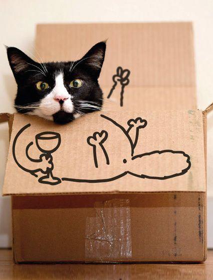 Gatos graciosos en una caja de cartón ¡Hola!