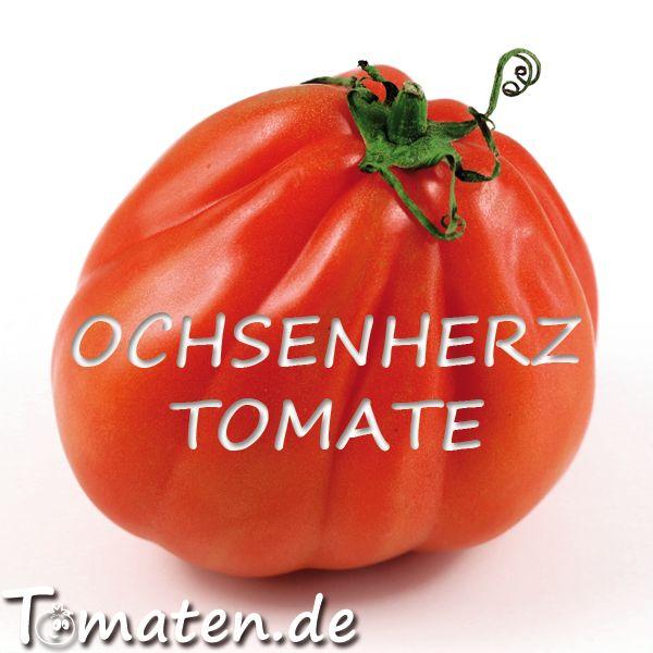 Ochsenherz Pflege Der Tomate Ochsenherztomate Tomaten Garten Tomaten