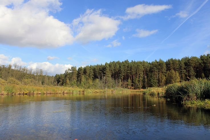 Szczególnie cenne fragmenty terenu Parku, osobliwości florystyczne i faunistyczne, a także wyróżniające się ukształtowanie geomorfologiczne chronione są w formie 11 rezerwatów przyrody.  www.it.mragowo.pl
