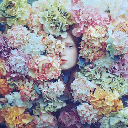 hydrangea | Flickr -  best garden flower bar none