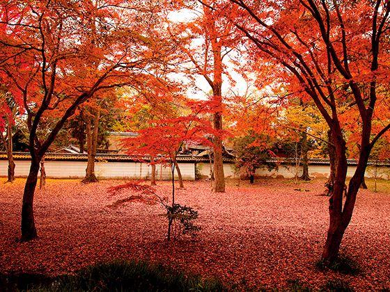 【厳選】京都の紅葉が美しいスポットと現在の色づき状況|関西版 紅葉特集2017|eoおでかけ