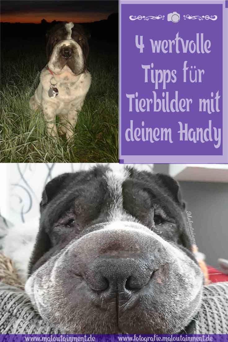 4 wertvolle Tipps für schöne Tierfotos – mit dem Handy