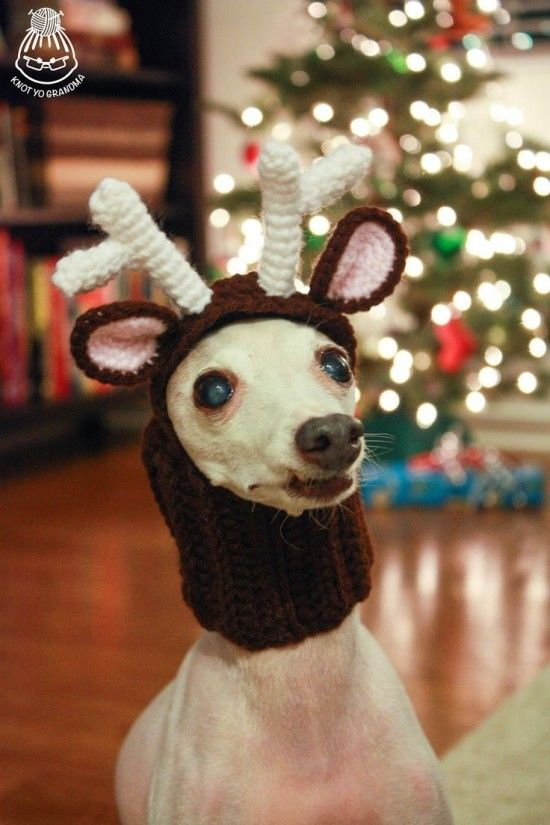 Reindeer Dog Free Crochet Hat Pattern. Poor Dog - the expression says it all!