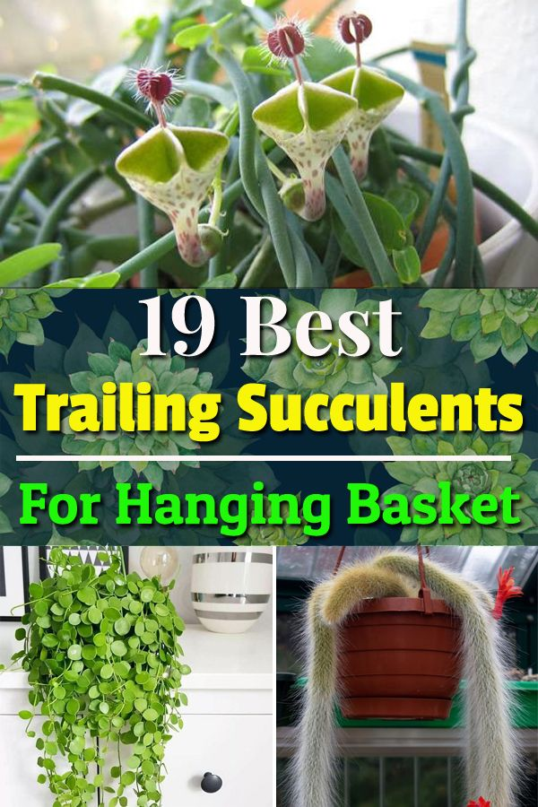 19 Best Trailing Succulents For Hanging Baskets Succulent Pots Diy Succulent Pots Hanging Baskets Diy