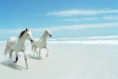 just beachy: Beautiful Horses, Horseback Riding, Bucket List, Animals, Animal Art, White Horses, Beach Horses