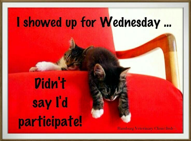 Happy Hump Day What S On Everyone S Agenda Today Anyone Getting Ready To Leave For A Vacation Anyone Cel Morning Quotes Funny Wednesday Humor Morning Humor