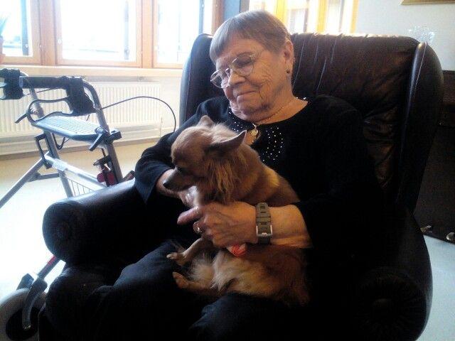 Nalle-koira mukana toivelaulupiirissä halittavana.