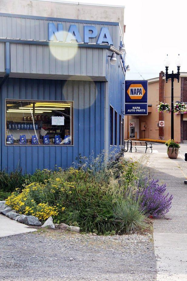 1st ever NAPA Auto Parts store rain garden.  Eatonville, WA - Rain Garden Capital