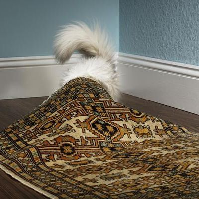 How to Get Rid of Dog Urine and Cat Urine Odors