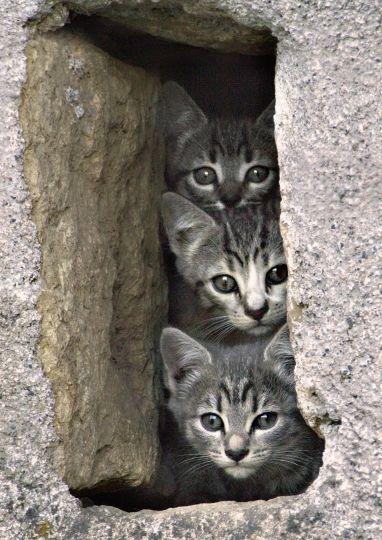 3p'tits chatons bien curieux ......