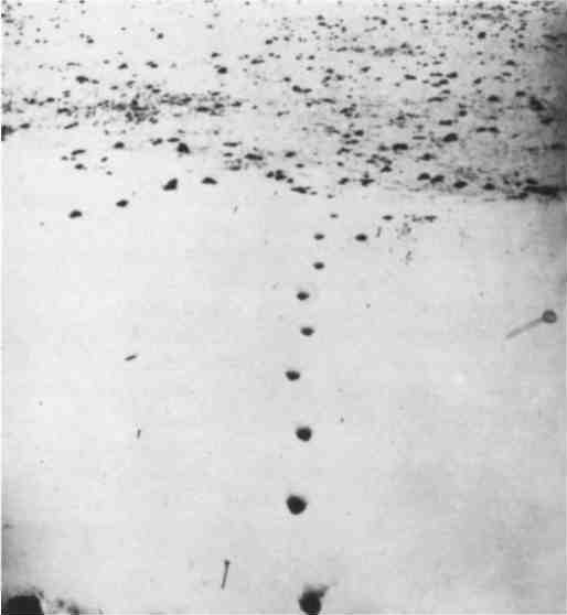 Field of Tracks, or Wolf Line