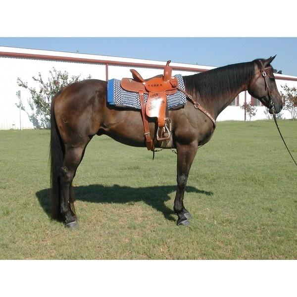 Barrel Horses For Sale Barrel Racing Horses 12 000 Liked On
