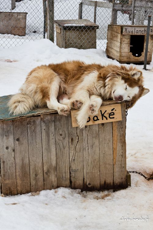 Stunning dog