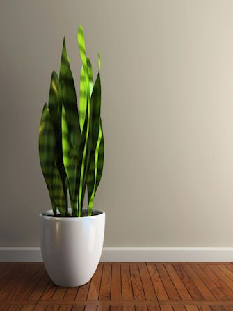 floor love the simple look and the mother in law 39 s tongue plant