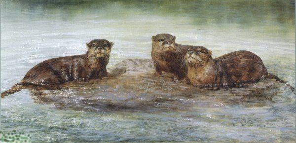David Crane. Otters