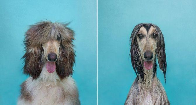 Antes e Depois: Essas Fotos Mostram Por que os Cachorros Odeiam Tomar Banho