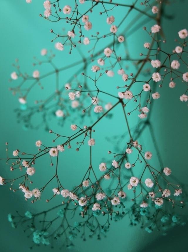 Roze en groen: mooie combinatie