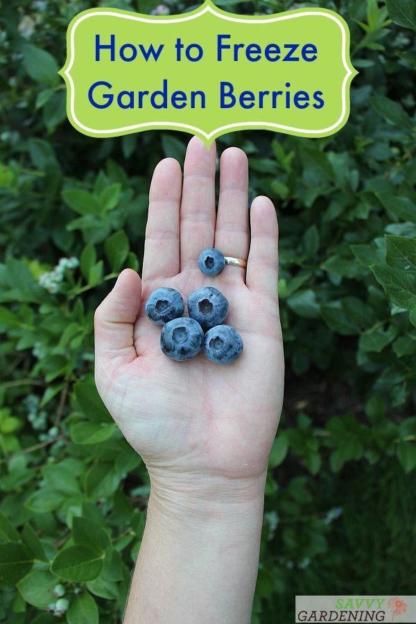Kết quả hình ảnh cho will blueberry bushes freeze