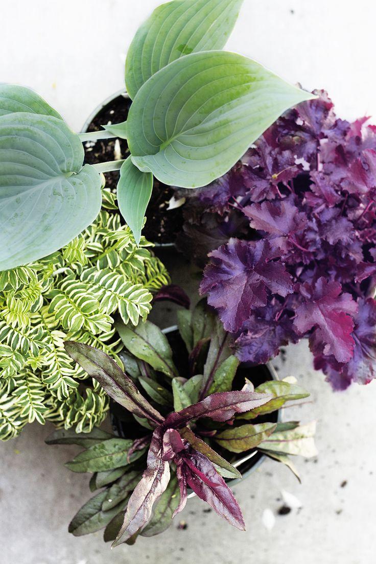 Tips for Choosing Foundation Garden Plants | Deuce Cities Henhouse | Bloglovin'