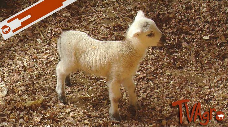 Buenas Prácticas Agrarias. B.P.G Buscando el bienestar animal.
