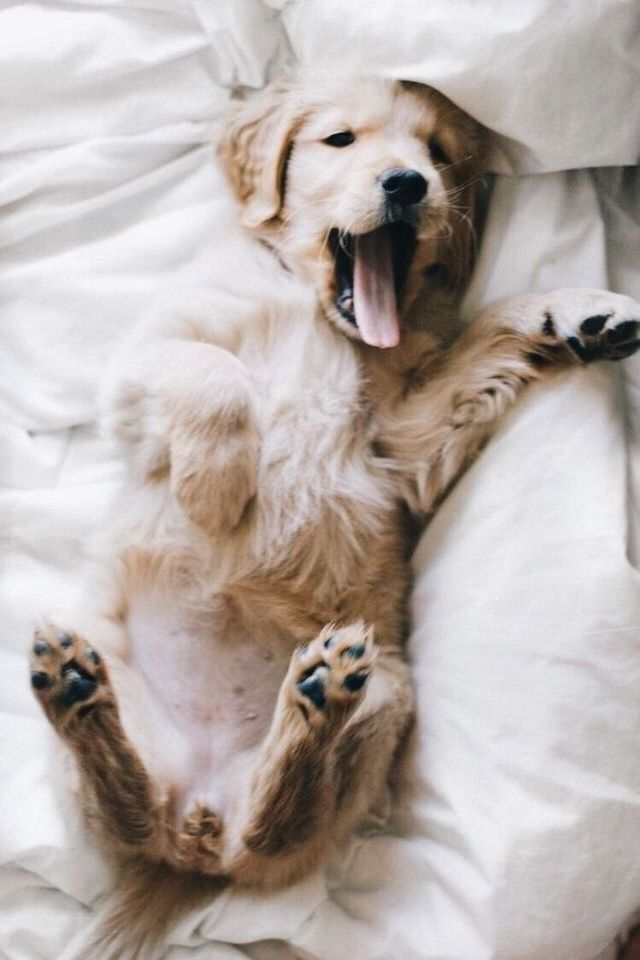 This Brilliant Photo Series Of Smiling Dogs Will Get Your Tail Wagging Smiling Dogs Dogs Zen Dog