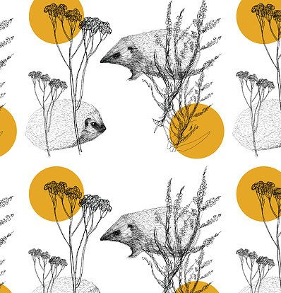 Hedgehog by Heidi Hynynen / Piirre Collective