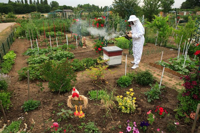 In Valenton, Val de Marne, France, a garderner-apiculturist in the garden of association Le Jardin du Cheminot opens a beehive, a cliché of traditional beekeeping.