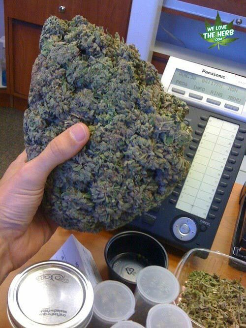 A bud in the hand is worth two on the bush.  #420