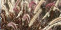 How to Use Vinegar to Kill Foxtail Weeds | eHow.... know what I will be doing this week....