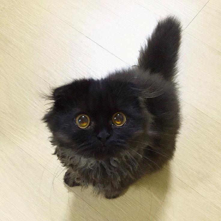「まっくろくろすけ出ておいで♪」 黒猫界の新星アイドル「ギモ」ちゃんが悶絶レベルの可愛さ   笑うメディア クレイジー