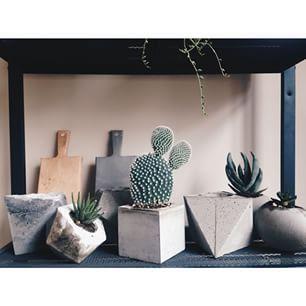 Instagram photo by mels_garden - A little sun at least☀️ #mels #melsgarden #concrete #concretedesign #handmade #pot #sunday #sukulent #succulove #design #decoration #interior #indoorgardening #urbangardening #cactus #instagood #instadaily #vsco #vscocam