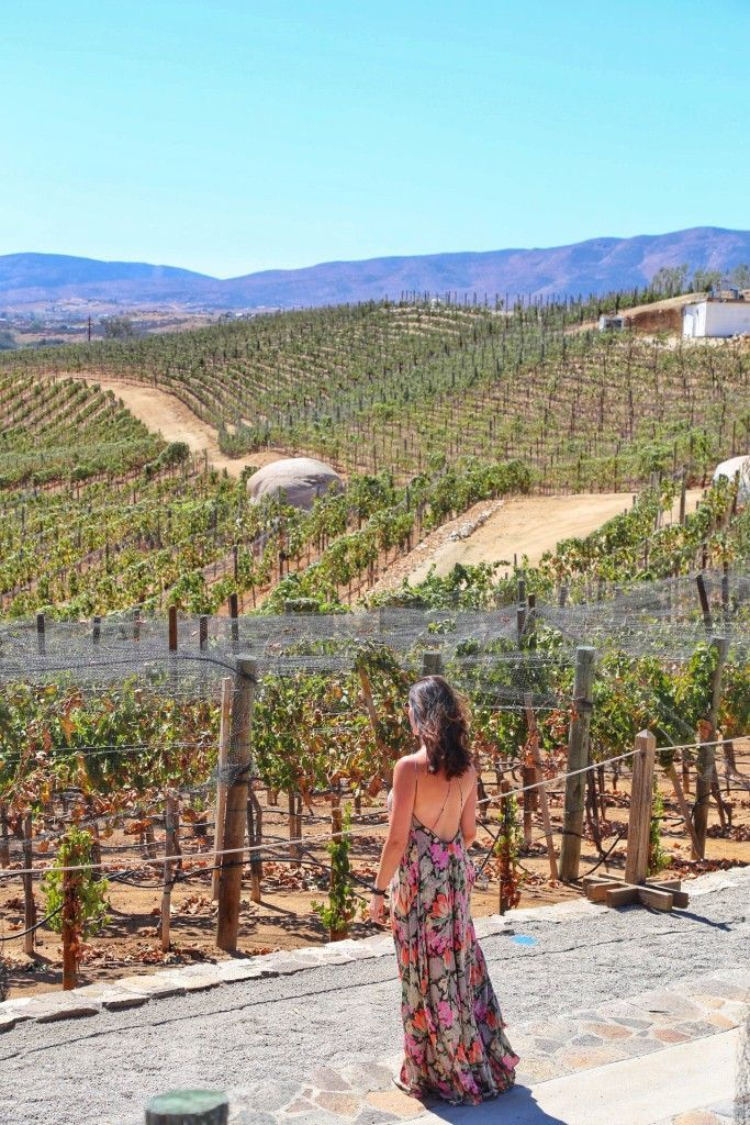 Valle De Guadalupe ~ Mexico's Wine Country   Sunny Coastlines