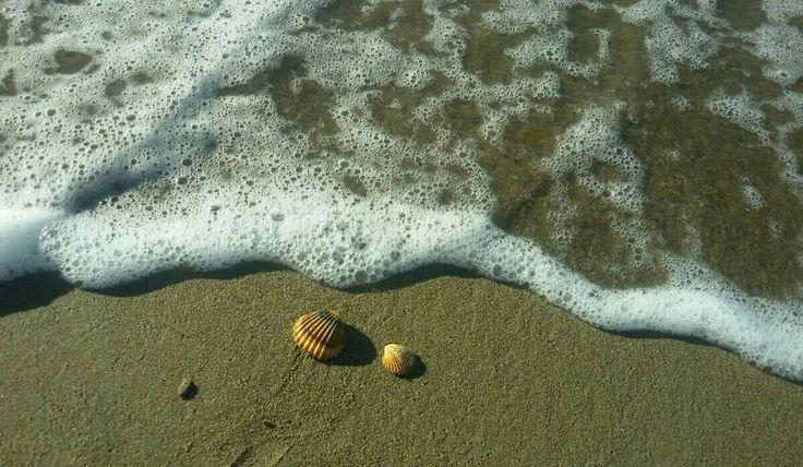 L'atteggiamento felice di un bambino che raccoglie conchiglie sulla spiaggia -immagine che più di ogni altra da l'idea completa della felicità puerile. Raccoglie conchiglie sulla spiagg…