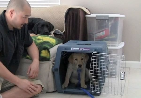 Crate training puppies is an exercise in patience (with Stetson it certainly was). If there's one thing I've learned as a guide dog puppy raiser it's how to crate train a puppy. I've been raising...
