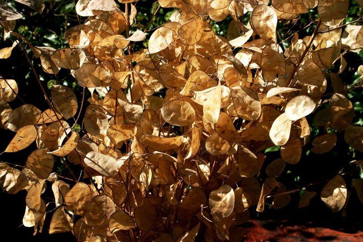 Le monete del papa. by Giancarbon.deviantart.com on @DeviantArt