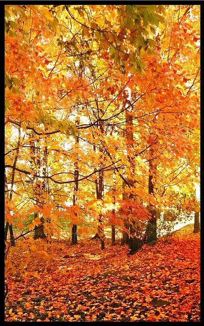 Beautiful Autumn Blanket