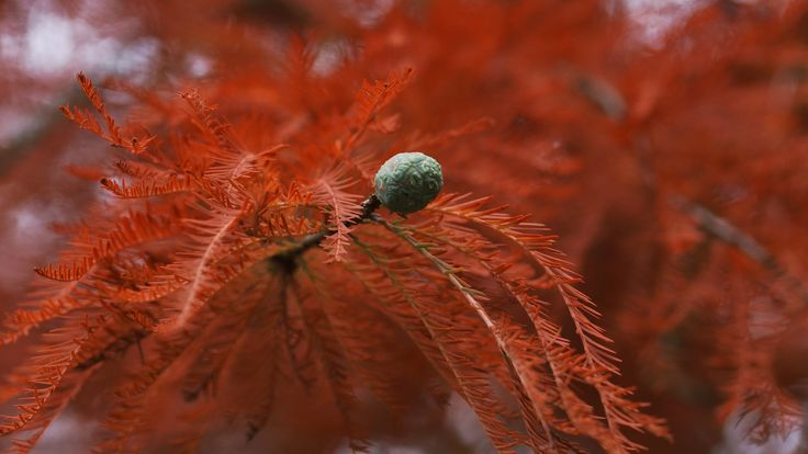 Zweig in Herbstfärbung by kerbla edzerdla on 500px
