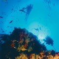 Diving at the Poor Knights Islands- Marine Reserve