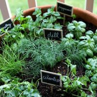 Need some ideas on growing herbs indoors? If you're in need of some indoor herb garden ideas to have them growing all year long, then check this list out!     Indoor Herb Garden Ideas Growing herbs is one homesteader skill that everyone should know (in my opinion, that is). It may be