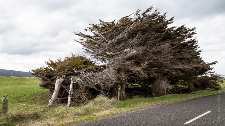 Southern Scenic Route - New Zealand - Nuova Zelanda