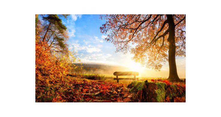 Φθινόπωρινο τοπίο, Φύση, Αυτοκόλλητα ντουλάπας