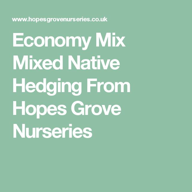 Economy Mix Mixed Native Hedging From Hopes Grove Nurseries