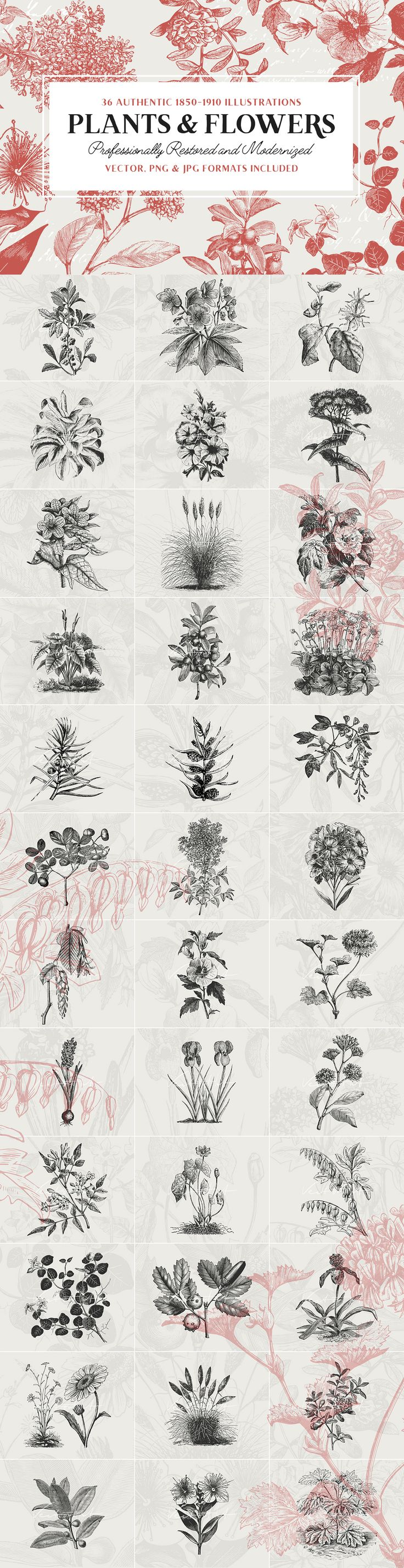36 Plant & Flower Illustrations by Vector Hut on @creativemarket