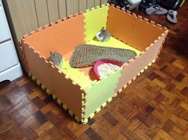17 best ideas about indoor guinea pig cage on pinterest for How to make a cheap guinea pig cage
