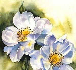 Watercolor of old-style roses - wonderful!