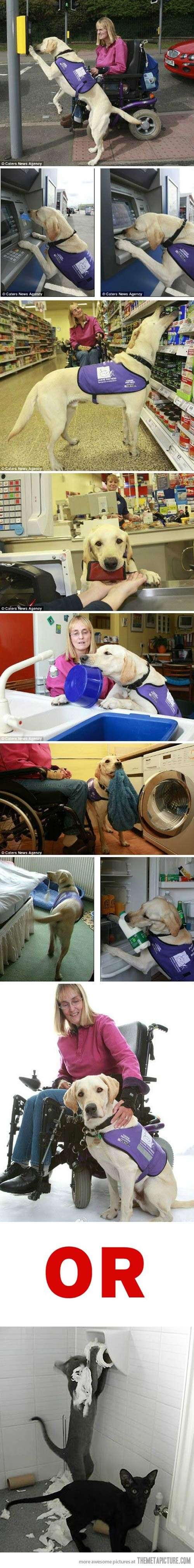 Dogs vs. Cats…: Cat, Animals, Awesome Dog, Pet, Service Dogs, Friend